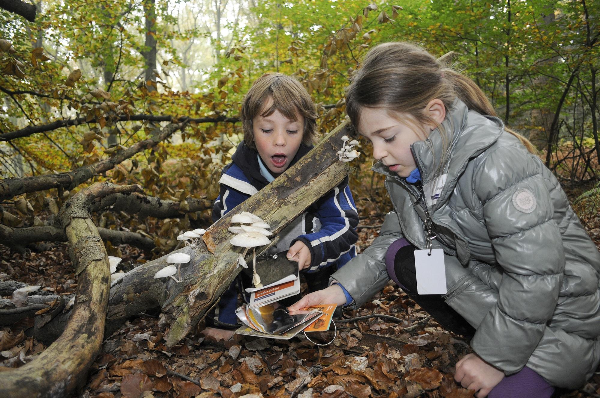 In de herfstvakantie   Speuren naar paddenstoelen in Brummen en Eerbeek