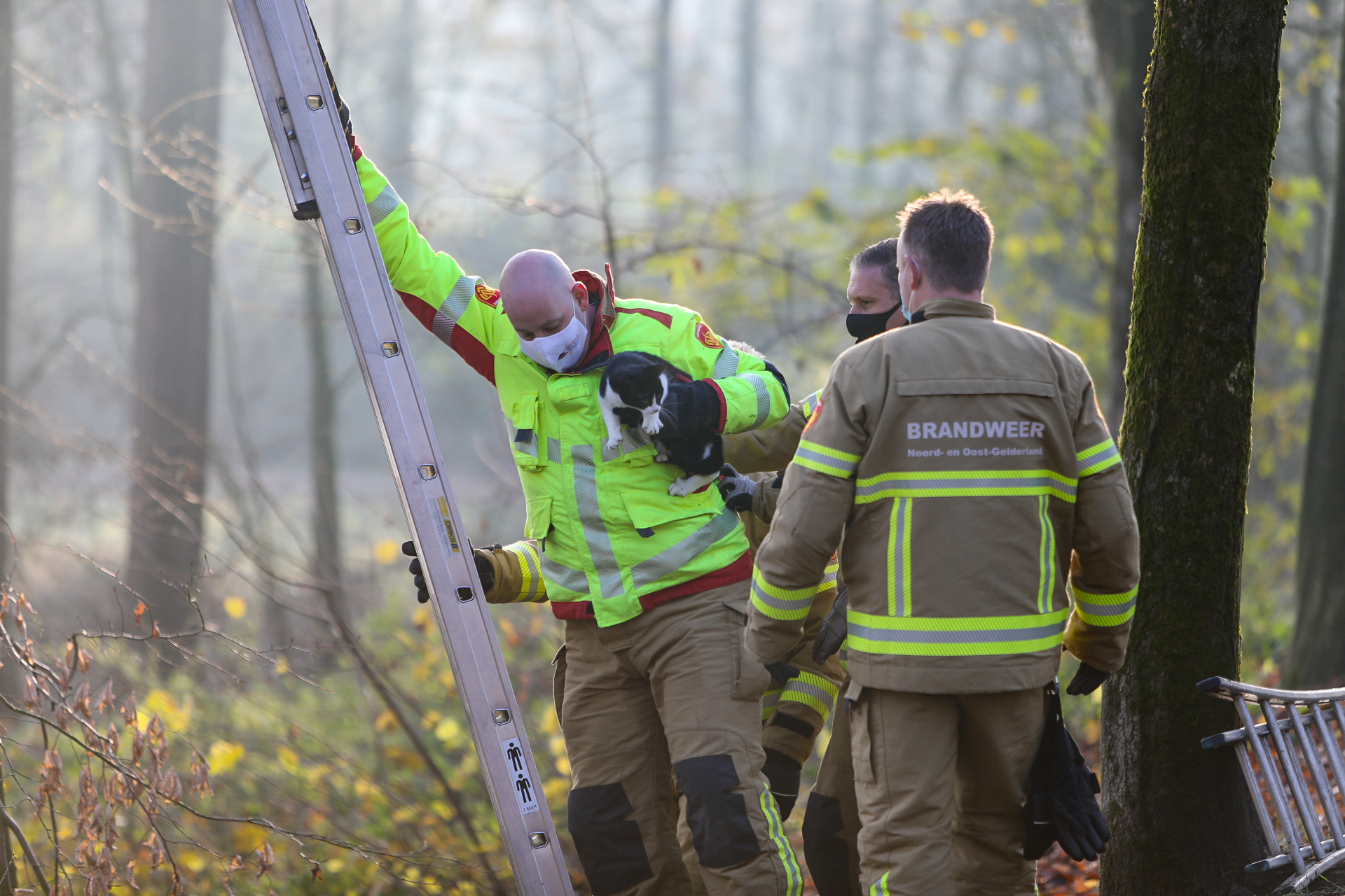 kat Mopsie zit ruim 48 uur in hoge boom; brandweer schiet te hulp