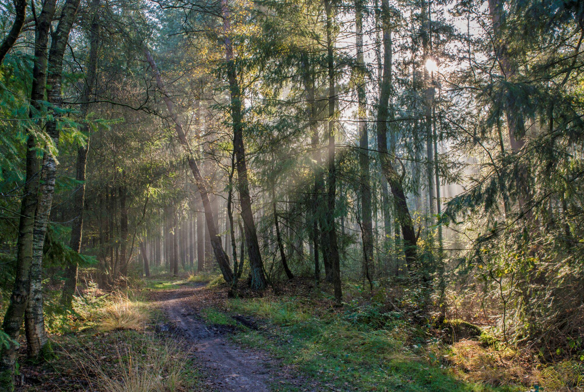 Asfalt weg uit natuurgebied Caitwickerzand
