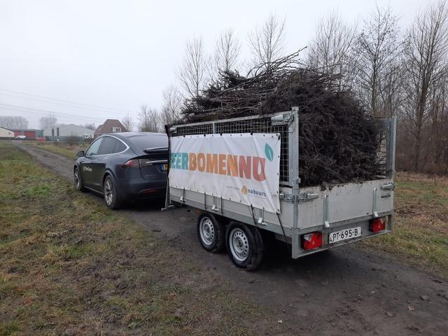 Plant een gratis conférence perenboom tegen klimaatverandering