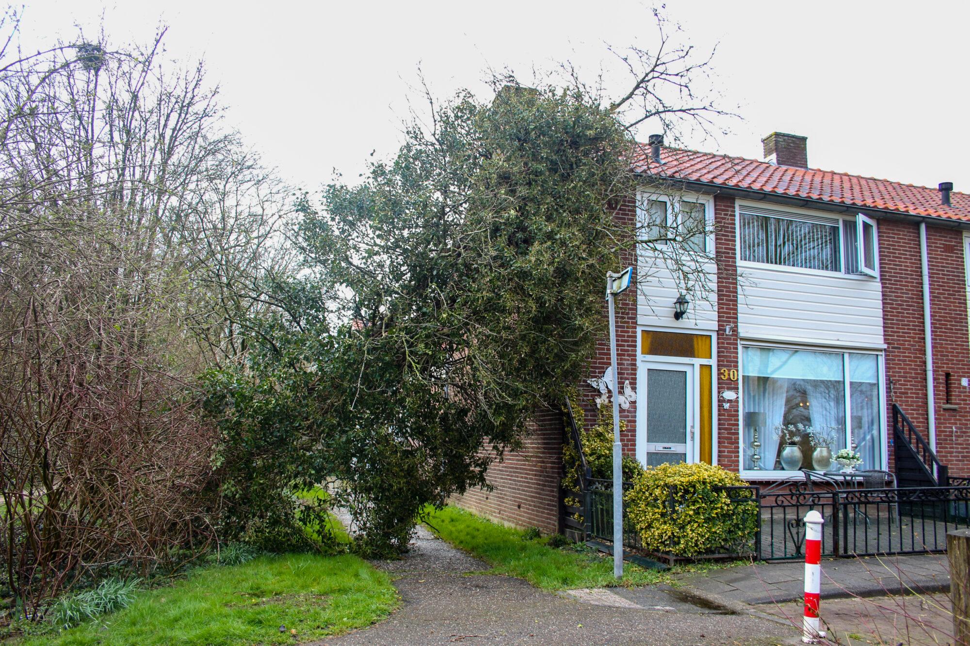Boom valt tegen woning in Zutphen