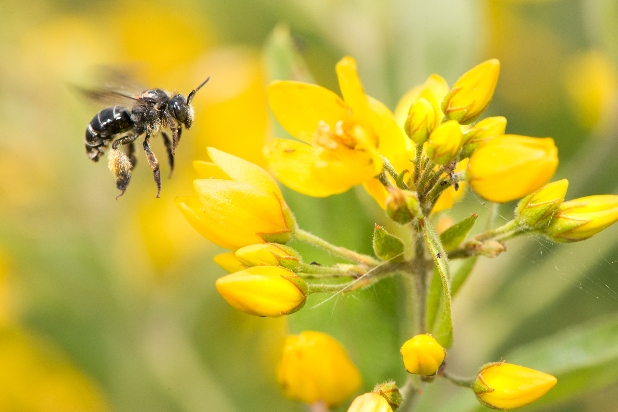 Project voor meer biodiversiteit in buitengebied