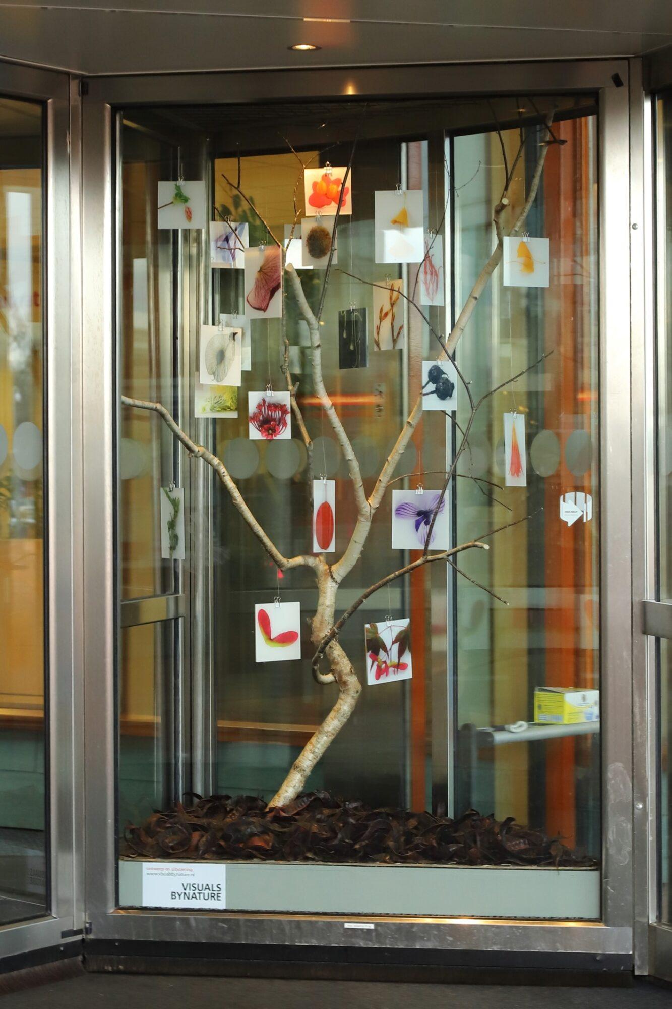 De natuur komt binnen in het Deventer Ziekenhuis