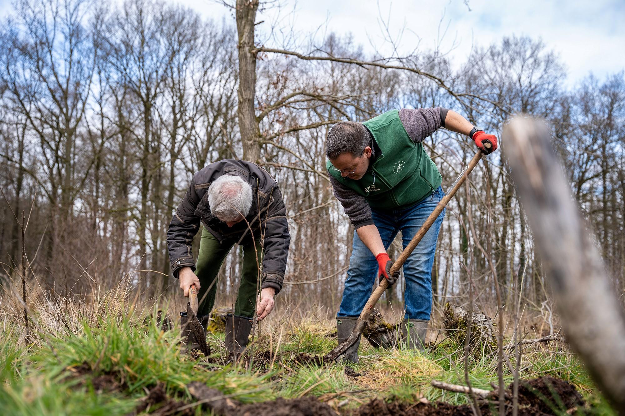 Duizend bomen geplant op Landgoed Beekzicht te Voorst