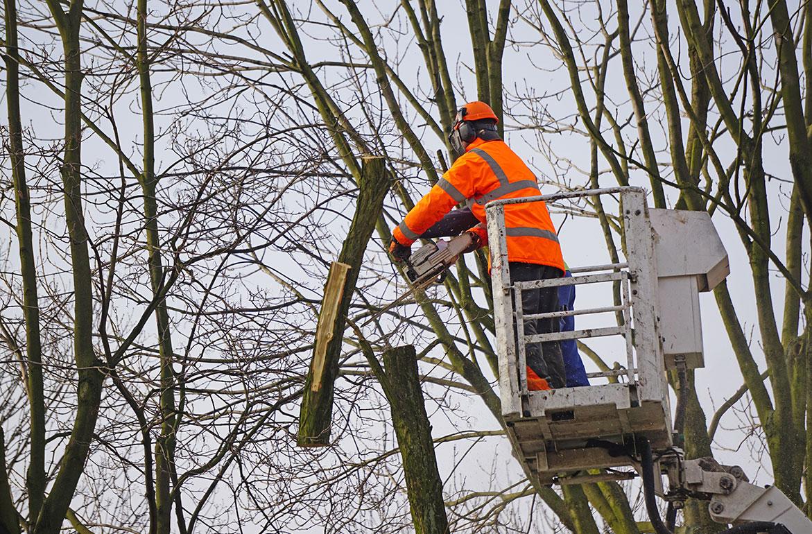 Omleiding autoverkeer door bomensnoei