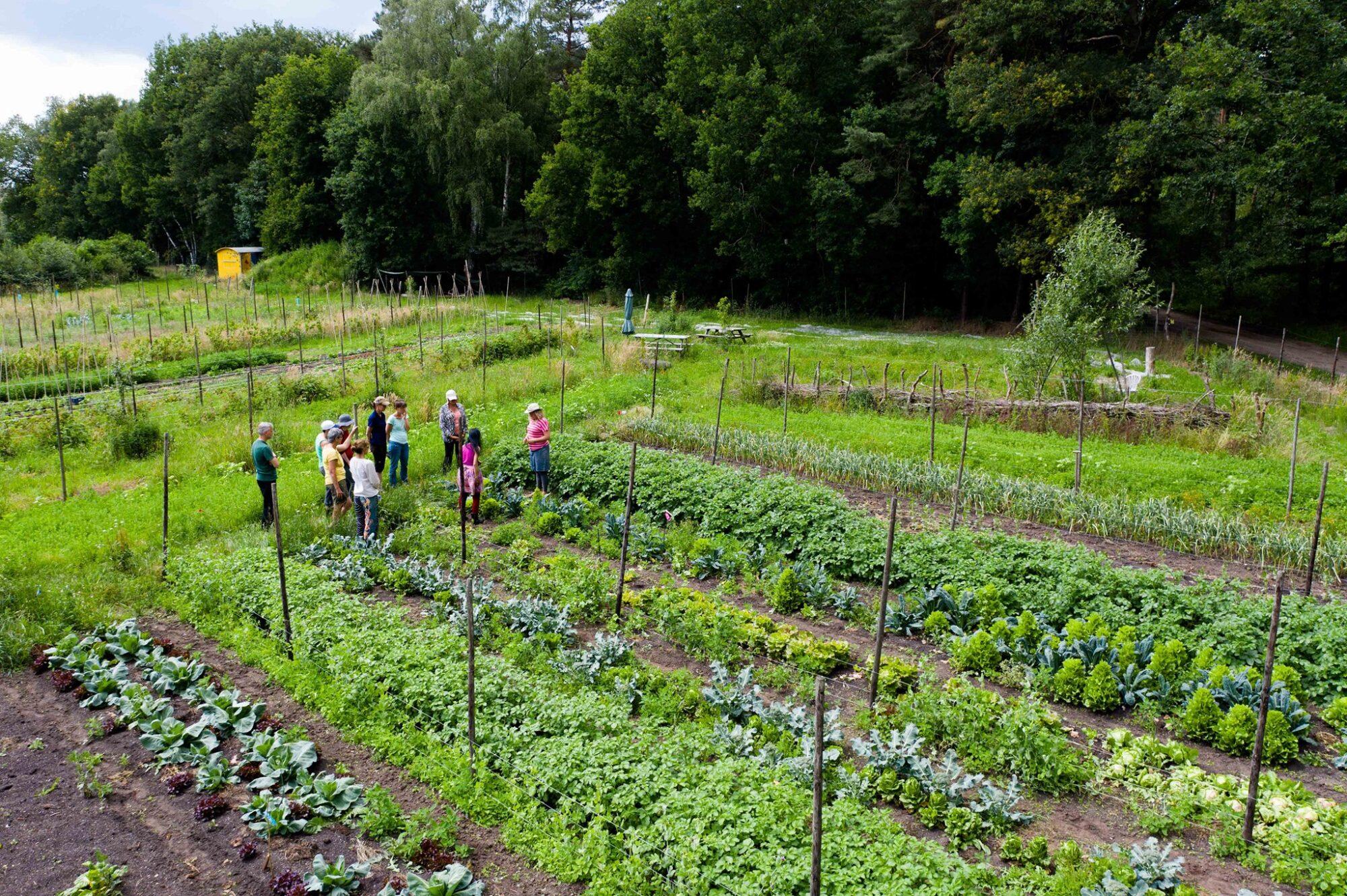 Groenten oogsten wanneer het jou uitkomt in Joppe