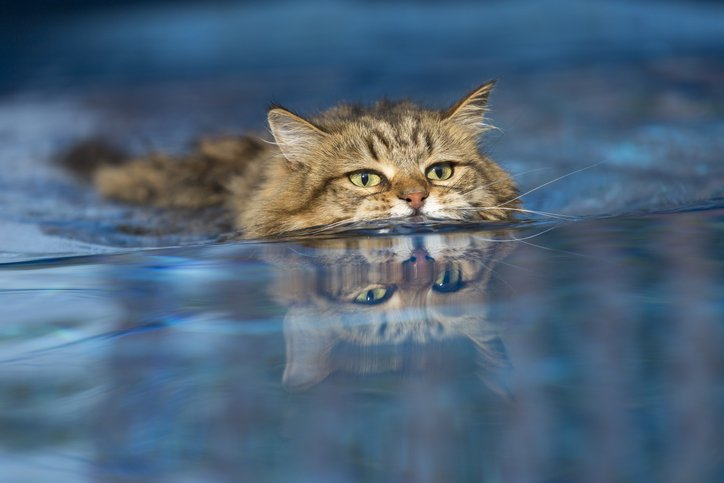 Ook katten nu welkom op recreatiegebied Bussloo