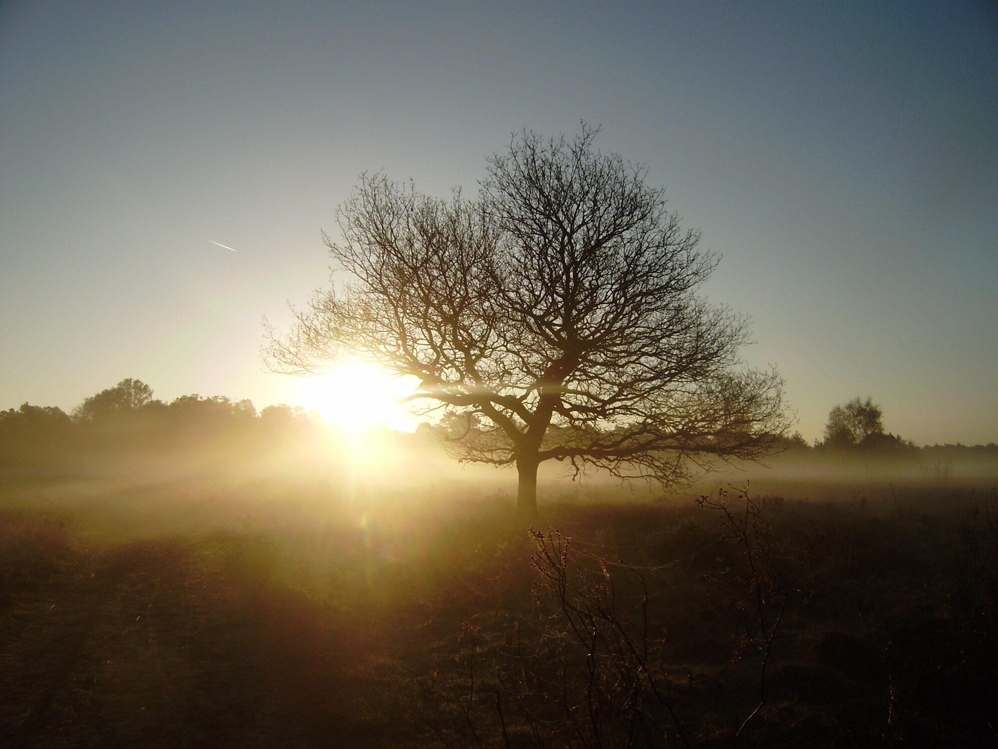 Wandeling voor vroege vogels over Gorsselse Heide