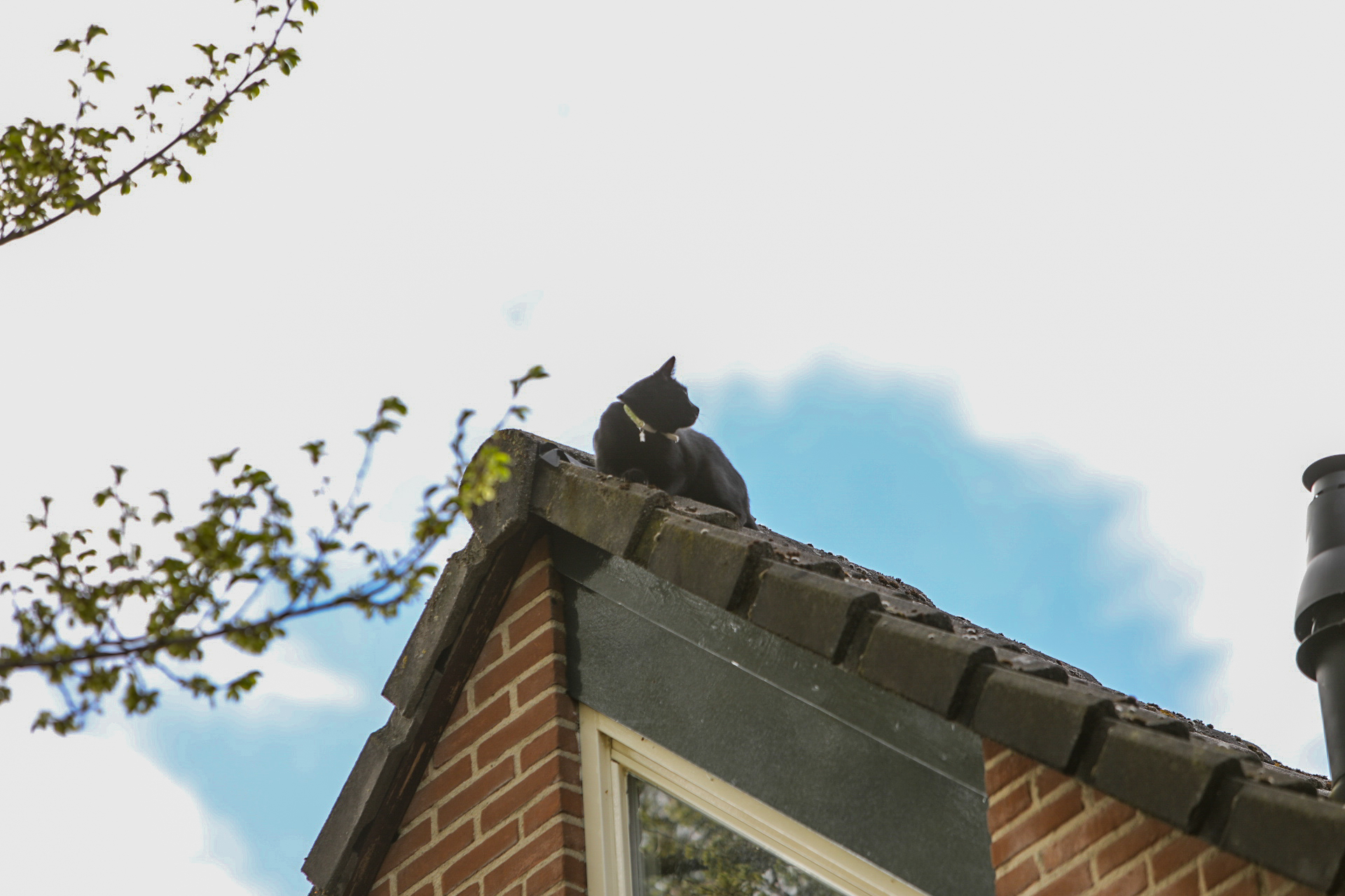 Kat op dak van woning; brandweer in actie