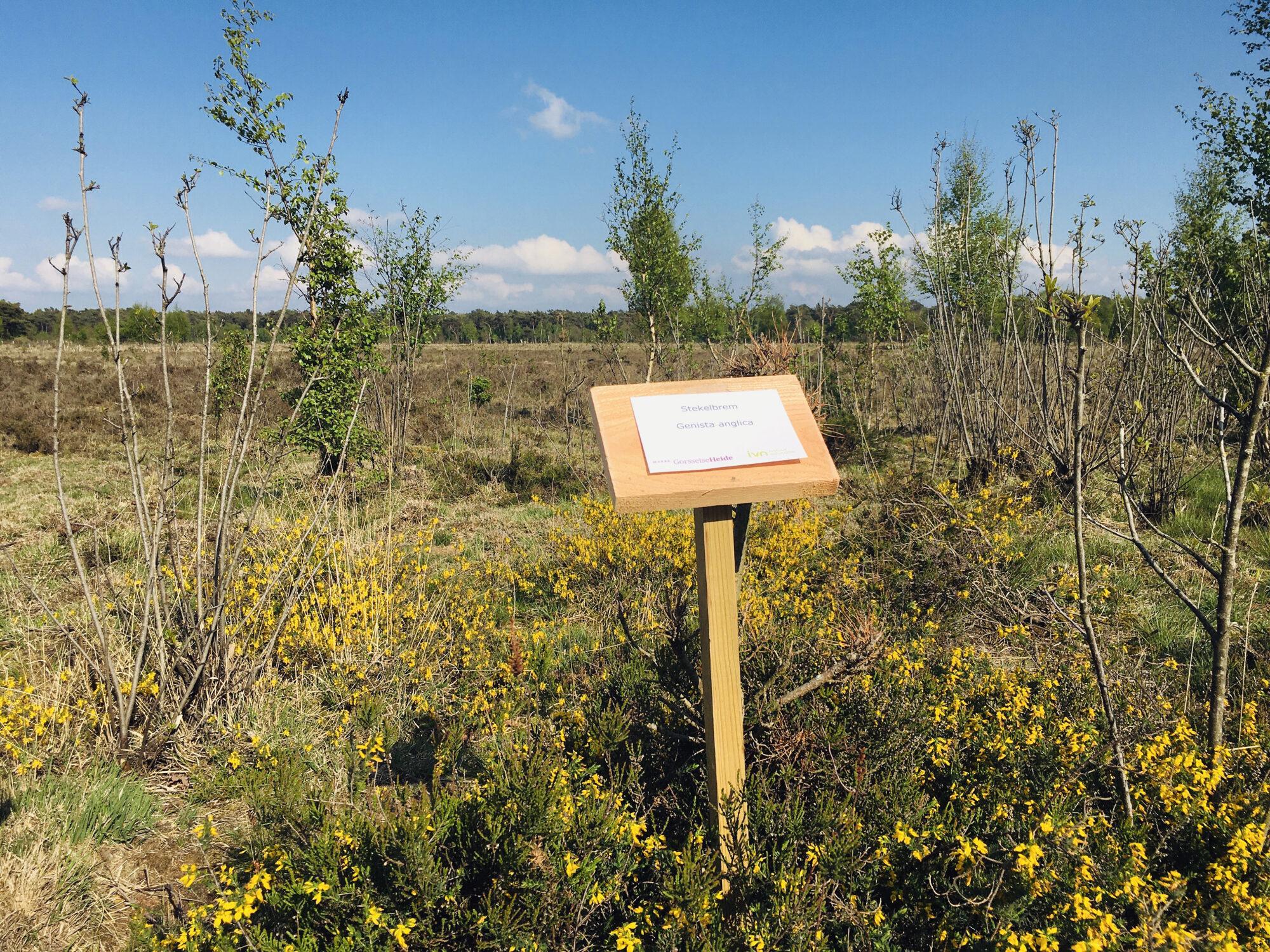 Wilde planten op de Gorsselse Heide