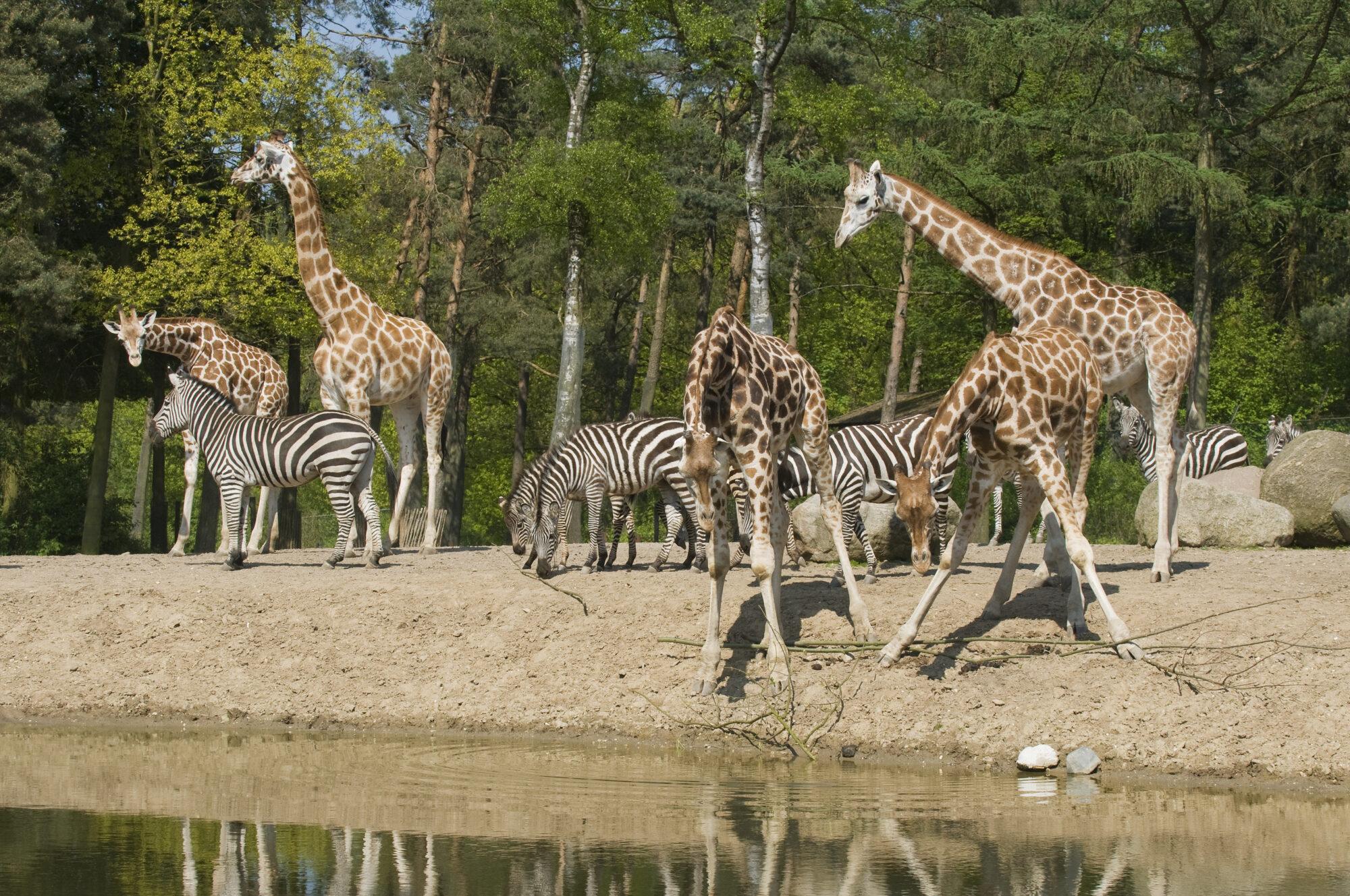 Burgers' Zoo verruimt openingstijden in de zomer
