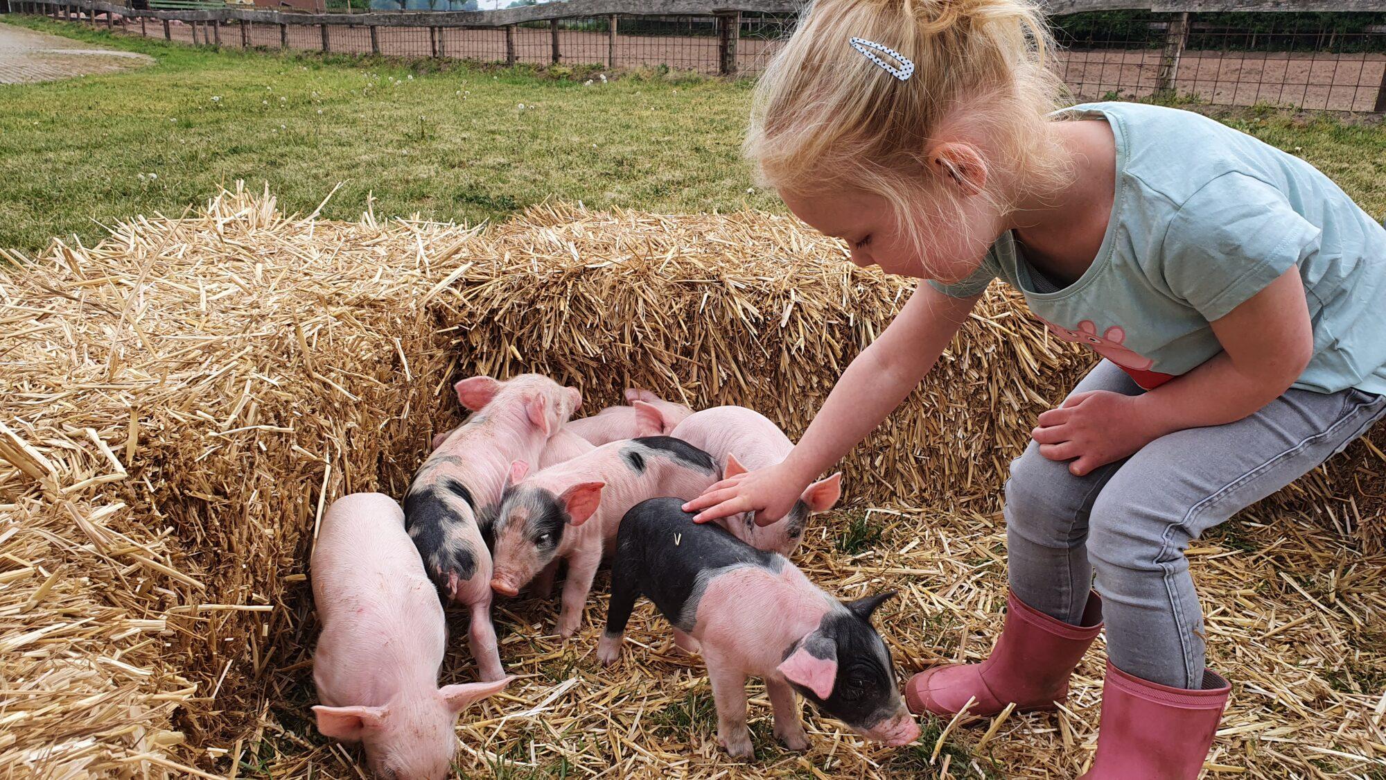 In (modder)bad met de varkens