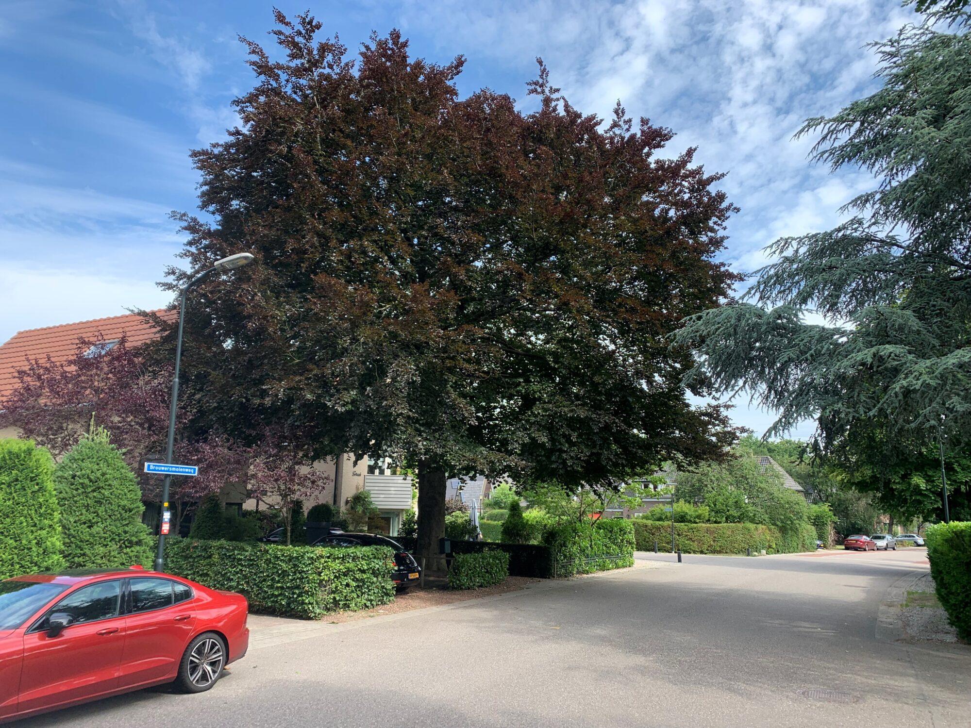 Subsidie voor bijzondere bomen in gemeente Apeldoorn