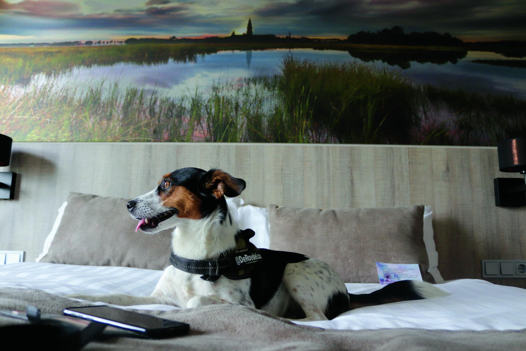 Twijfel je of de hond meegaat op vakantie? Dit zijn de mogelijkheden!