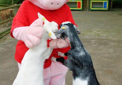 Kerstmarkt met Binky