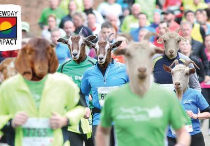 Hardlopen voor honderd geiten