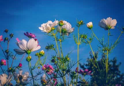 Tuinliefhebbers maak je blij met zaden