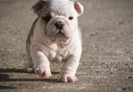 Puppy checklist: wat heb je allemaal nodig?