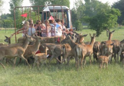 Open dag Hertenboerderij de Weerd