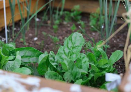 Zelf groenten en kruiden kweken in uw stadstuin
