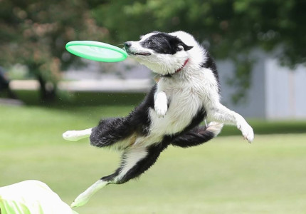 Dogfrisbee op hoogste niveau