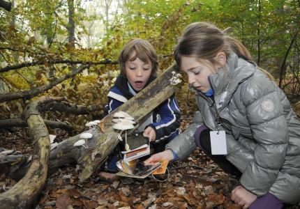 In de herfstvakantie | Speuren naar paddenstoelen in Brummen en Eerbeek