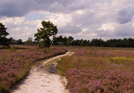 Vacatures Alzheimer Nederland Oost Veluwe (Apeldoorn, Brummen, Epe, Hattem, Heerde en Voorst)