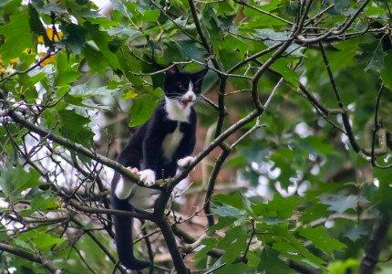Kat zit uren in de boom in Beekbergen; brandweer schiet te hulp