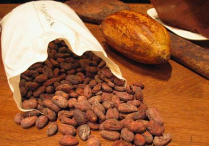 De geheimen van cacao ontrafeld