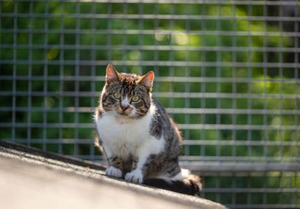 Huisdier van de week   Schuwe katten willen lekker buiten rondstruinen