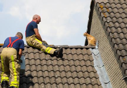 Brandweer is druk met kattige hulpacties