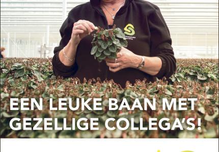 EEN LEUKE BAAN METGEZELLIGE COLLEGA'S!